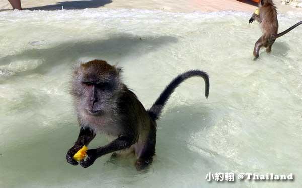 Monkey Beach猴子海灘@Phi Phi Islands2.jpg
