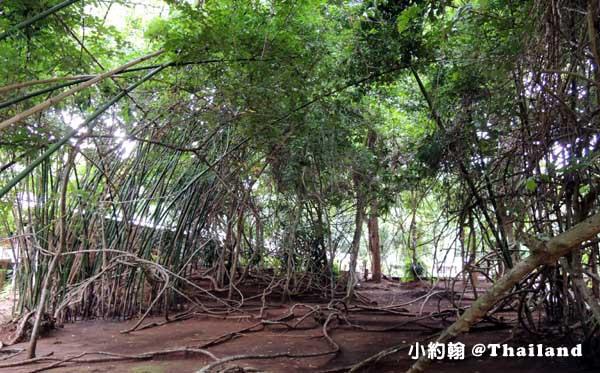 Home Phutoey River Kwai Resort woods.jpg