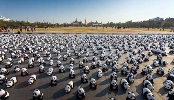 1600 Pandas+ Sanam Luang.jpg