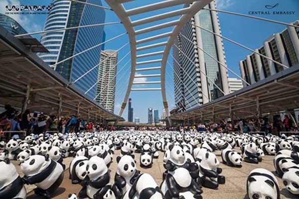 1600 Pandas+ BTS Chong Nonsi.jpg