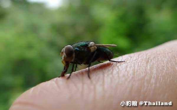 泰國旅遊小心蚊蟲叮咬.jpg