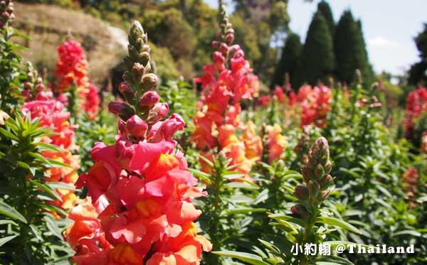 泰后佛塔Naphapholphumisiri花園3.jpg