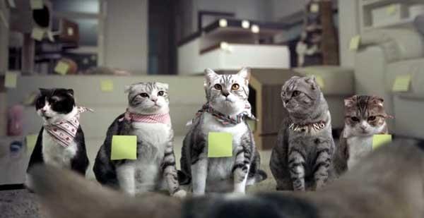 泰國創意廣告COTTO貓咪浴室間計劃4.jpg