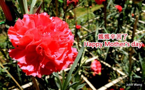 Happy Mother's day媽媽辛苦了.jpg