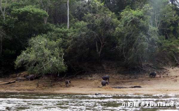 Floathouse River Kwai Resort黑水牛.jpg