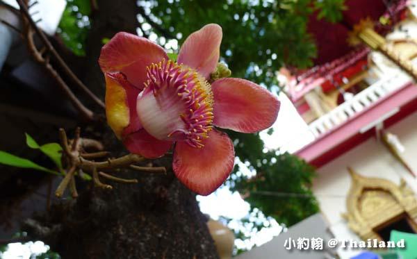 清邁Wat Phan On佛寺5.jpg