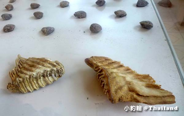 150 Million Year old Mollusk Fossil4.jpg