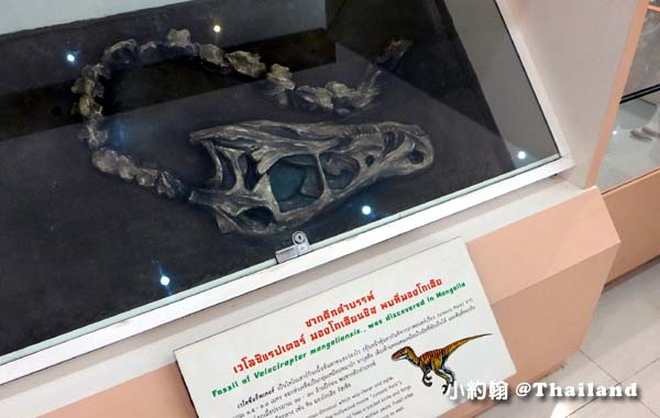 Old Shell Fossil Museum Nong Bua Lamphu 150 Million Years old3.jpg