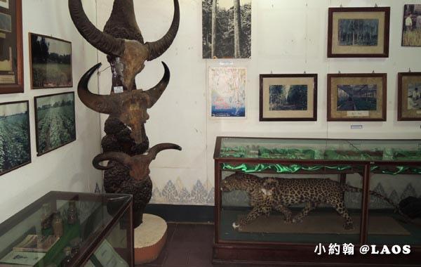 Laos National Museum寮國國家博物館37.jpg