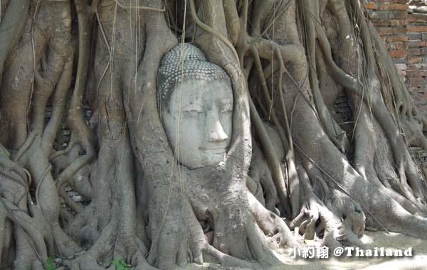 大城瑪哈泰寺Wat Mahathat Ayutthaya7.jpg