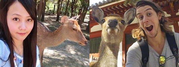 日本奈良鹿竟是ㄈㄈ尺1