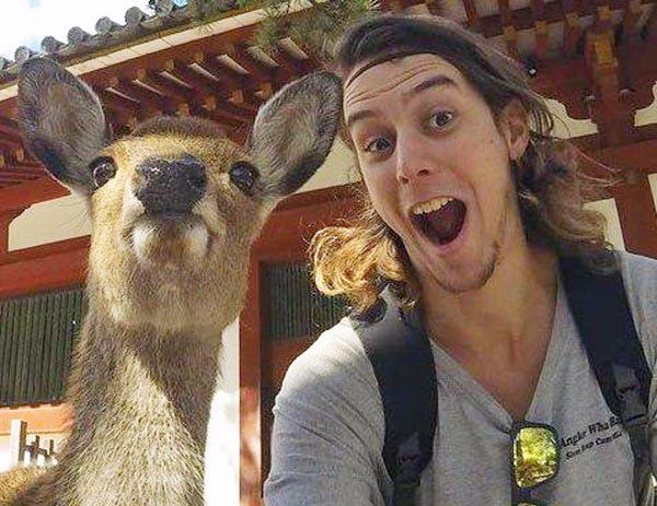 日本奈良鹿竟是ㄈㄈ尺