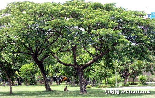 Lumphini Park曼谷倫披尼公園5.jpg
