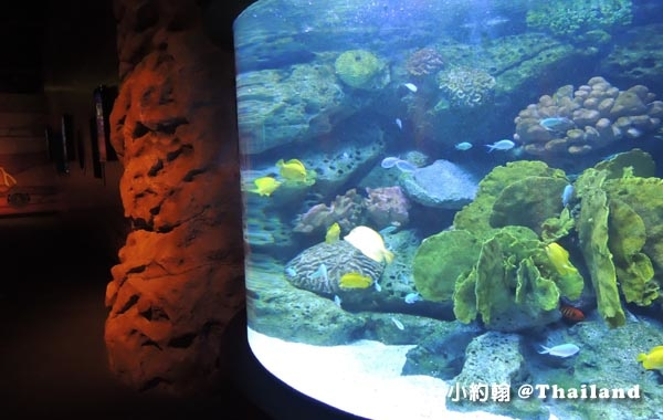 Sea Life Bangkok Ocean World曼谷海洋世界9.jpg
