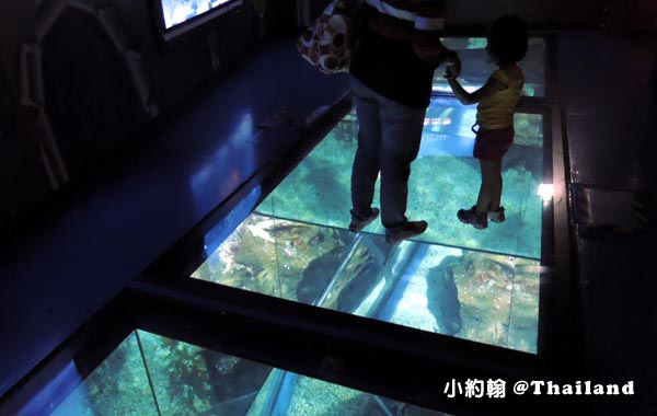 Sea Life Bangkok Ocean World曼谷海洋世界10.jpg