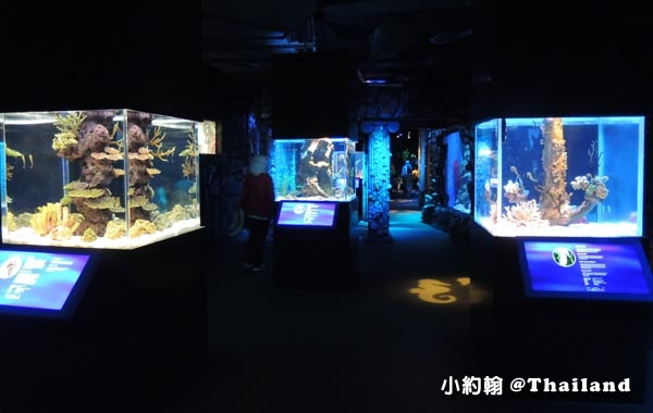 Sea Life Bangkok Ocean World曼谷海洋世界13.jpg