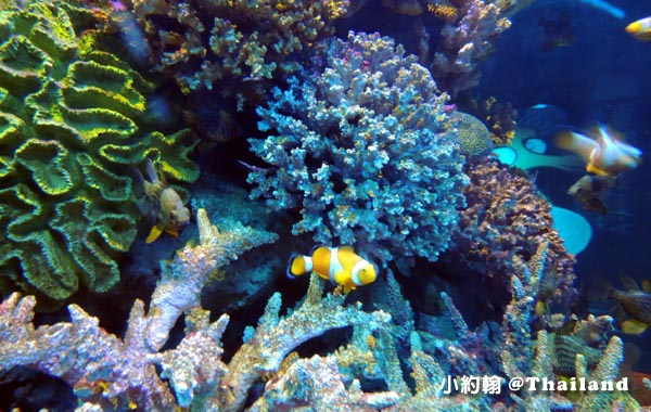 Sea Life Bangkok Ocean World曼谷海洋世界nemo.jpg