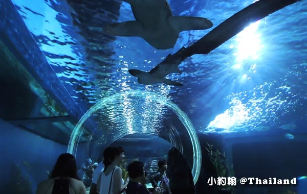 Sea Life Bangkok Ocean World曼谷海洋世界21.jpg