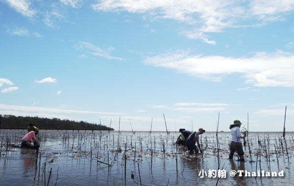 Klong khone Mangrove Samut Songkhram.jpg