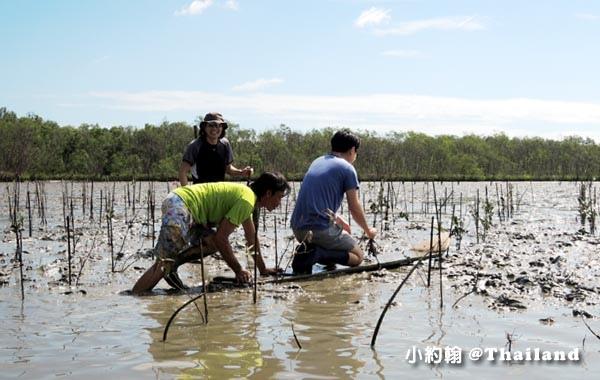 Klong khone Mangrove Samut Songkhram2.jpg