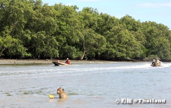 Monkey Klong khone Mangrove Samut Songkhram.jpg