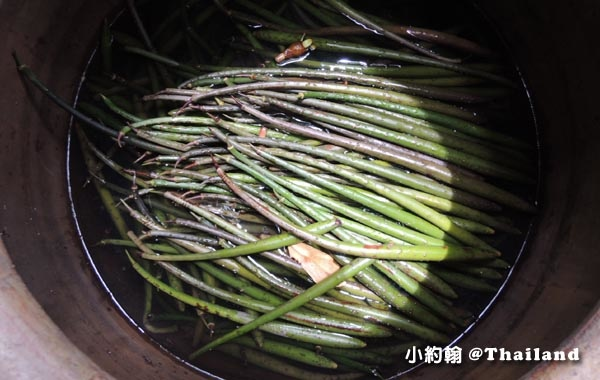 Klong khone Mangrove水筆仔Kandelia obovata.jpg
