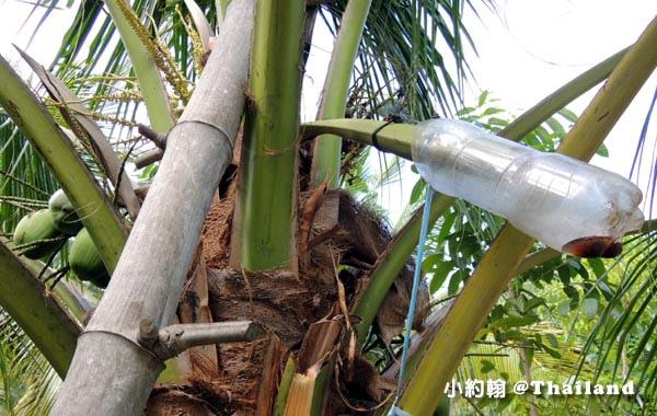 Coconut Museum.Baanrimklong Homestay製作椰子糖4.jpg
