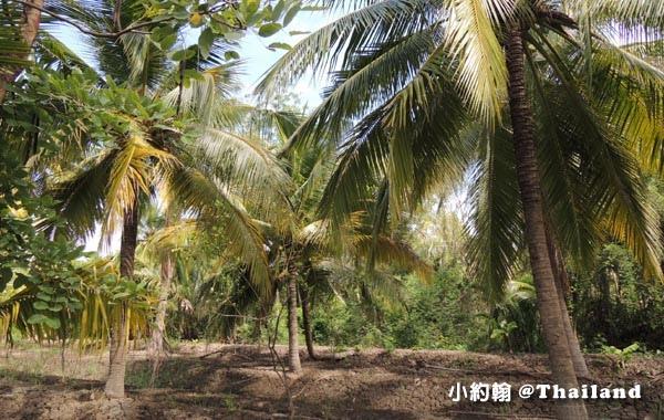 Coconut Museum.Baanrimklong Homestay椰子園.jpg