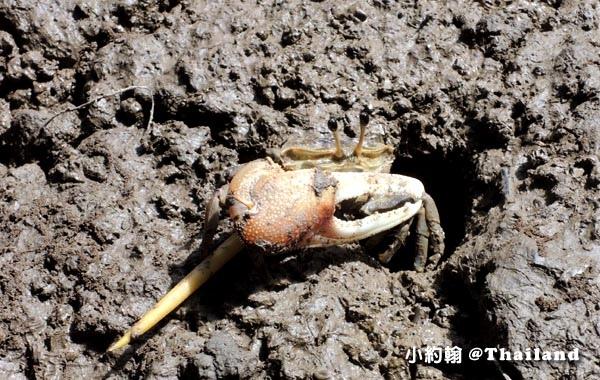 Baanrimklong Homestay.Samut Songkhram小螃蟹.jpg