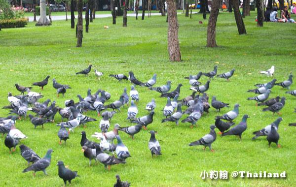 Chatuchak Park Bangkok 鴿子.jpg