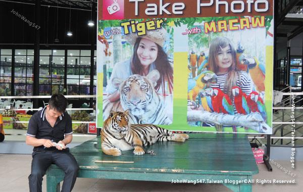 NongNooch Pattaya東芭樂園Tiger.jpg