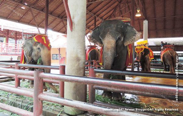 NongNooch Pattaya東芭樂園大象.jpg