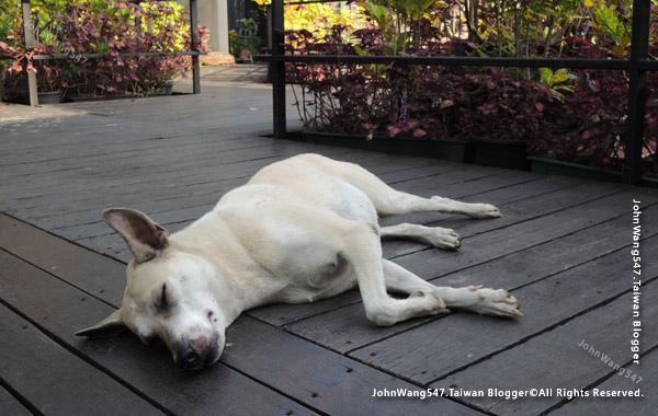 Bangkok Tree House cafe dog2.jpg