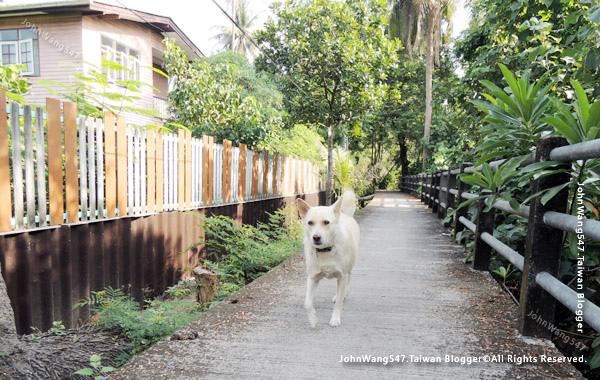 Bang Kobua Bang Nam Pheung dog2.jpg