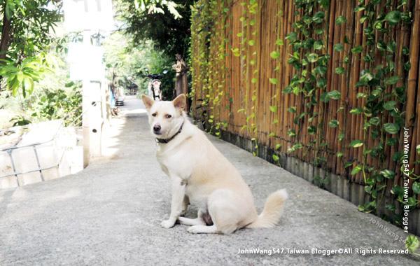 Bang Kobua Bang Nam Pheung dog.jpg