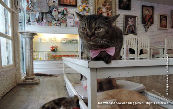 Caturday Cat Cafe Bangkok6.jpg