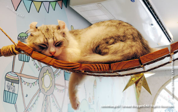 Caturday Cat Cafe Bangkok8.jpg