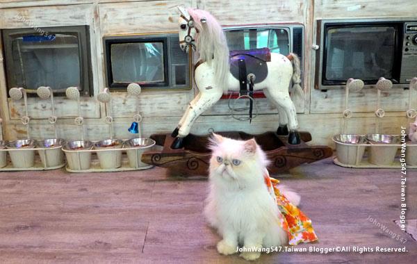Caturday Cat Cafe Bangkok10.jpg