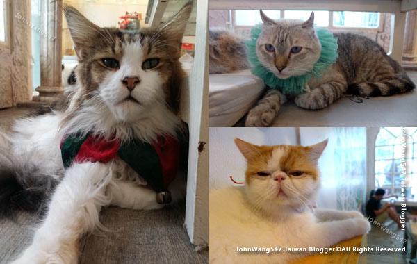 Caturday Cat Cafe Bangkok12.jpg