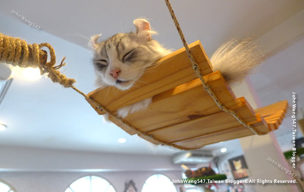 Caturday Cat Cafe Bangkok11.jpg
