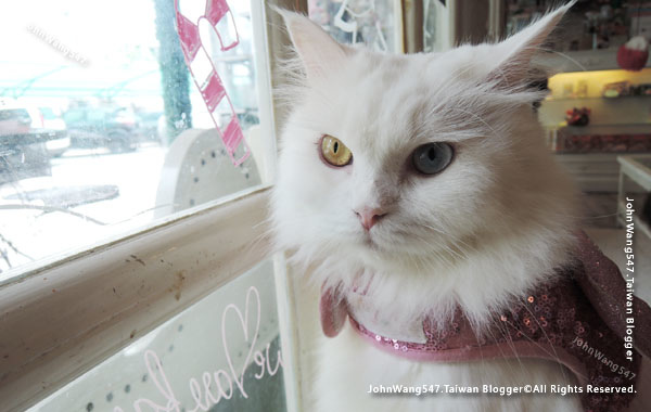 Caturday Cat Cafe Beautiful cat2