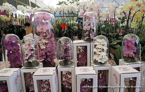 Siam orchid center 暹羅蘭花市集3.jpg