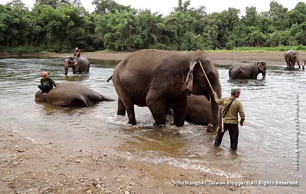 大象與象夫的鉤子1.jpg