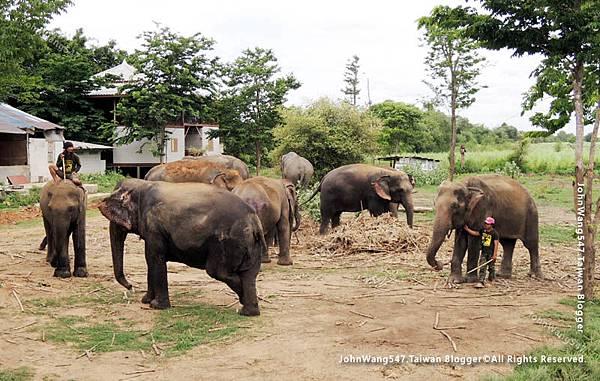 大象與象夫的鉤子2.jpg
