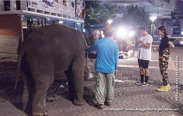 請拒絕泰國大象園騎大象拍照等消費.jpg