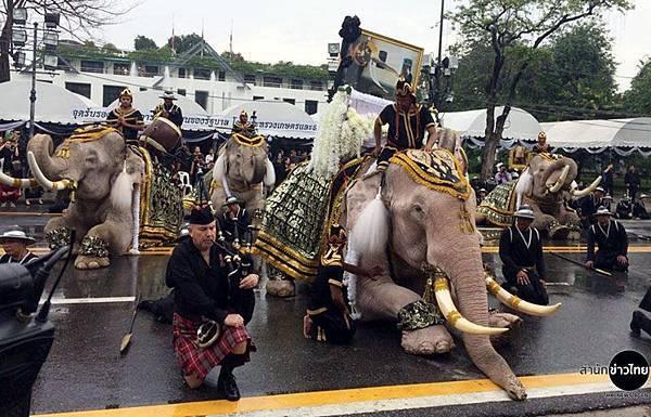 11頭白象已故泰王屈膝行禮致敬