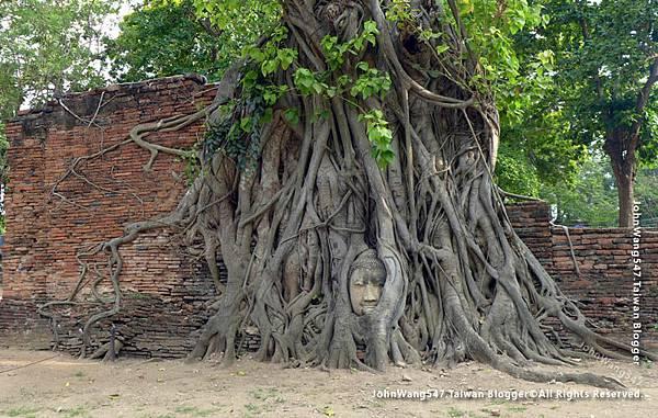 Wat Mahathat大城瑪哈泰寺樹中佛頭.jpg