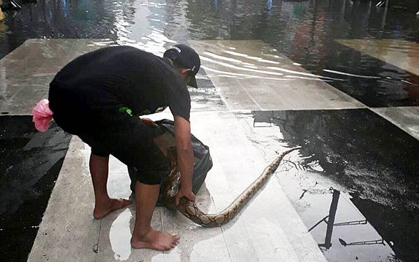 泰國曼谷街頭有大蛇