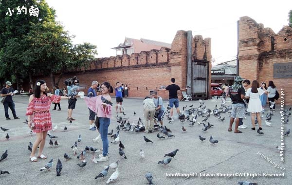 Pigeons Chiang Mai Tha Pae Gate.jpg