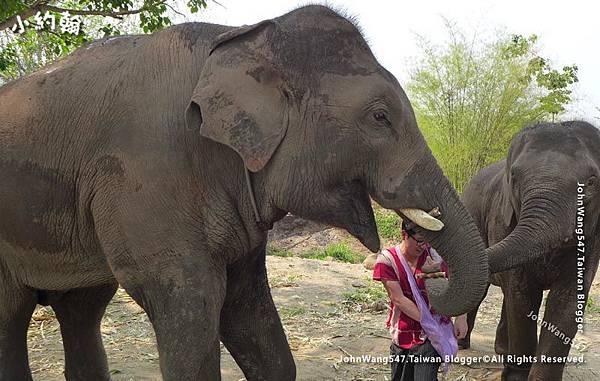 清邁Kerchor大象生態公園遊.jpg